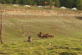 Nomade con cavalli.