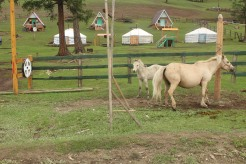 Cavalli davanti a gher e casette tradizionali.