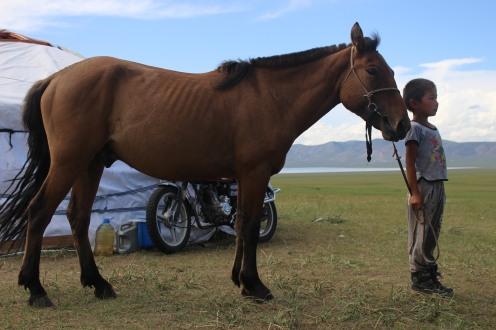 Bambino con il suo cavallo.