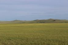 Steppa mongola.