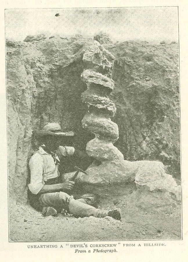 Unearthing a Devil's Corkscrew from a hillside