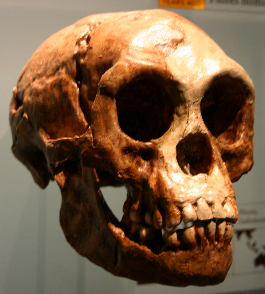 Homo_floresiensis