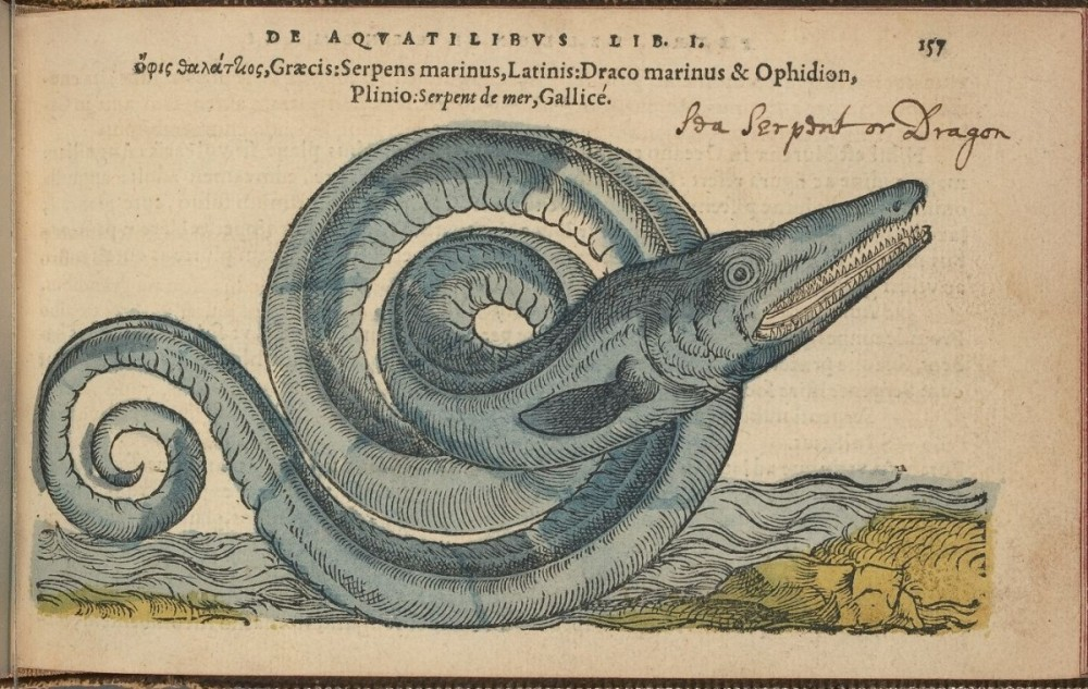 9321_62744_345_Sea_serpent_1